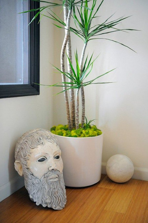 TOMKitchen-plant-and-old-plaster-head-070611_0885
